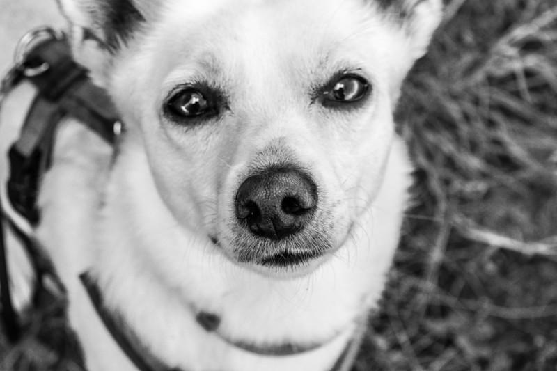 Tierschutzhund Hund aus dem Ausland