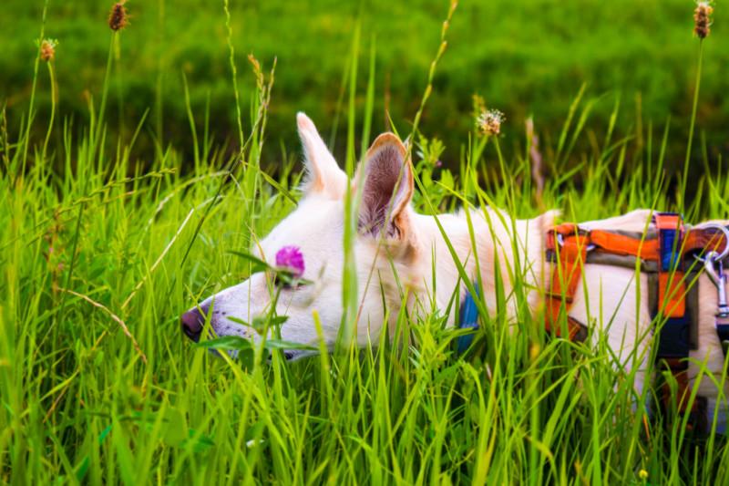 Aktivitäten mit Hund, den Hund auslasten