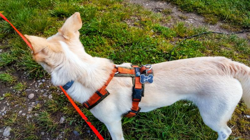 Dogtap Hund verschwunden Hund Sicherheit Hundeblog Canistecture