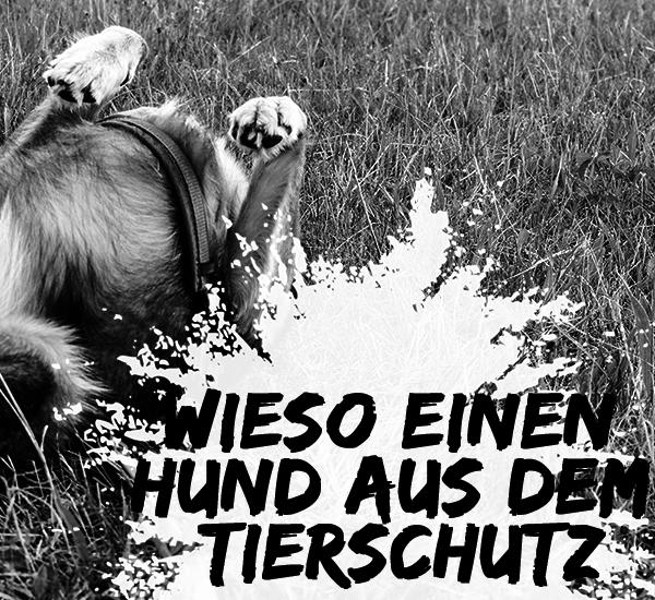 tierschutzhund-hund-aus-dem-ausland-600