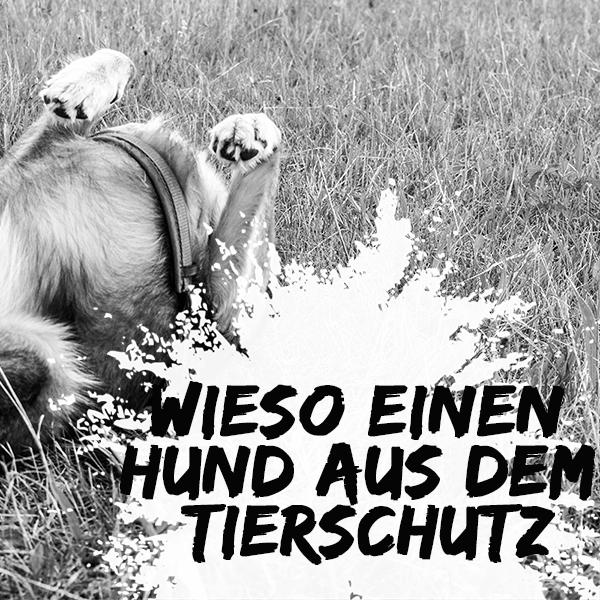 Tierschutzhund: Warum hast du einen Hund aus dem Ausland?
