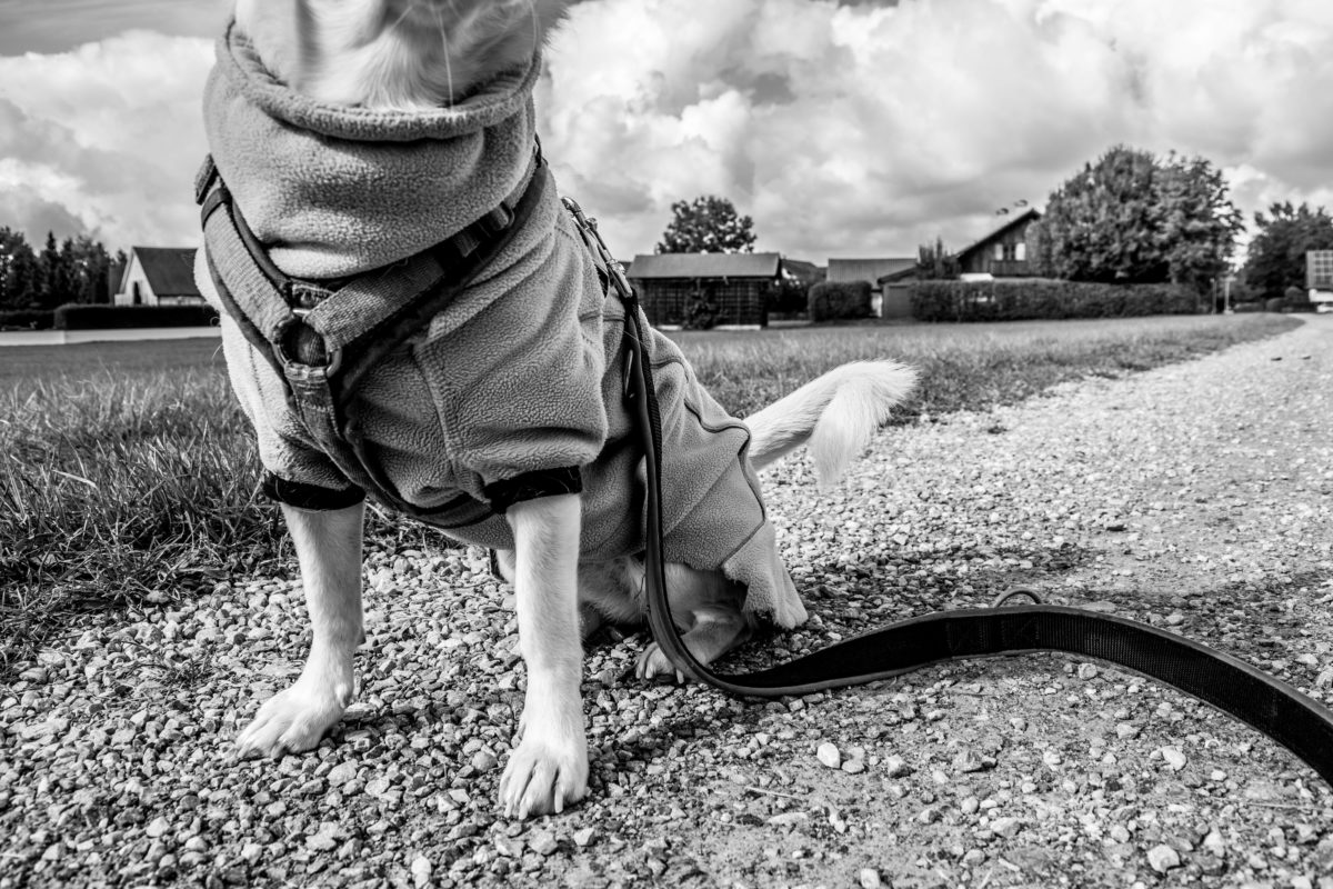 seelenhund hundeblog canistecture hund-14