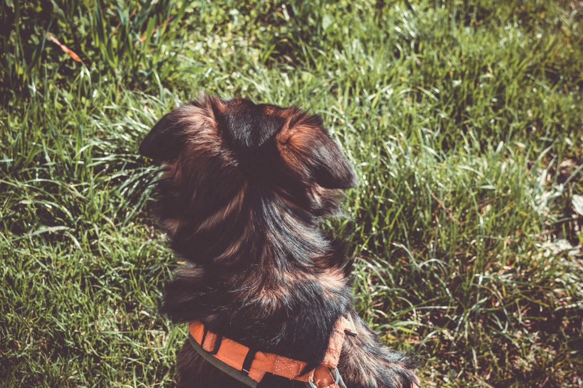 seelenhunde hundeblog canistecture hund-16