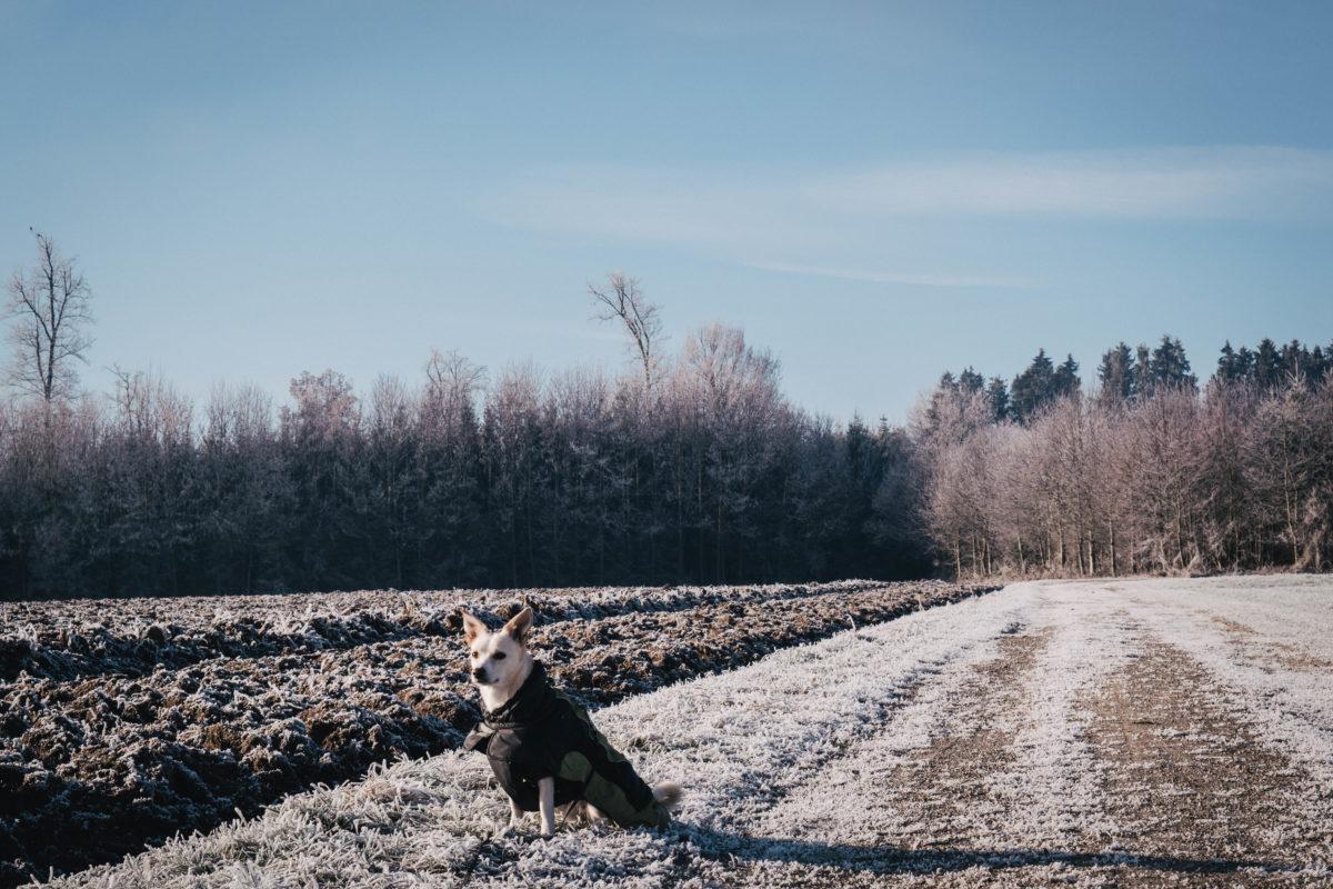 weihnachten mit schwierigem Hund