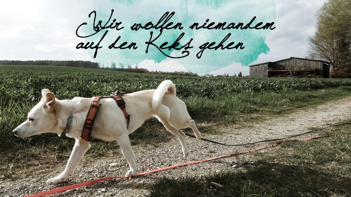 Hund rennt dog canistecture