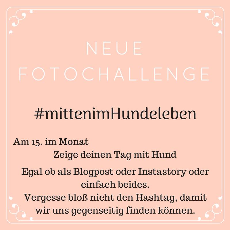 #mittenimHundeleben