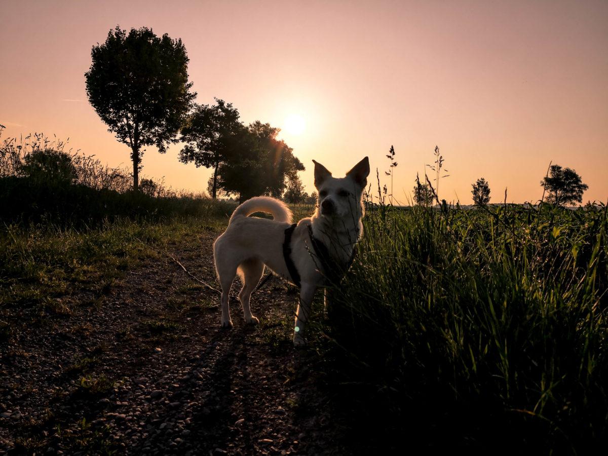 Hundeblog Canistecture stehender Hund