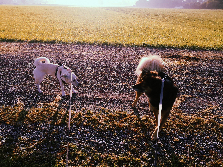 Zwei Hunde kommunizieren
