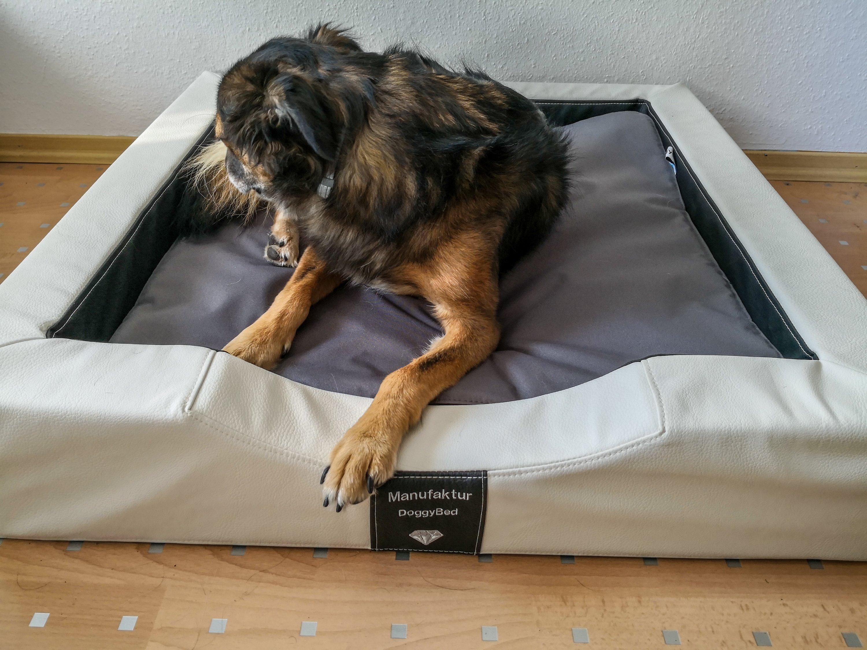 Orthopädisches Hundebett von DoggyBed
