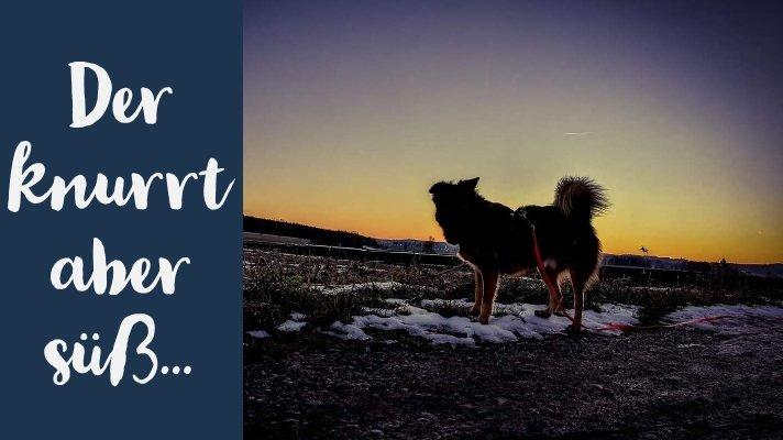 Hundeblog Canistecture Der knurrt aber süß