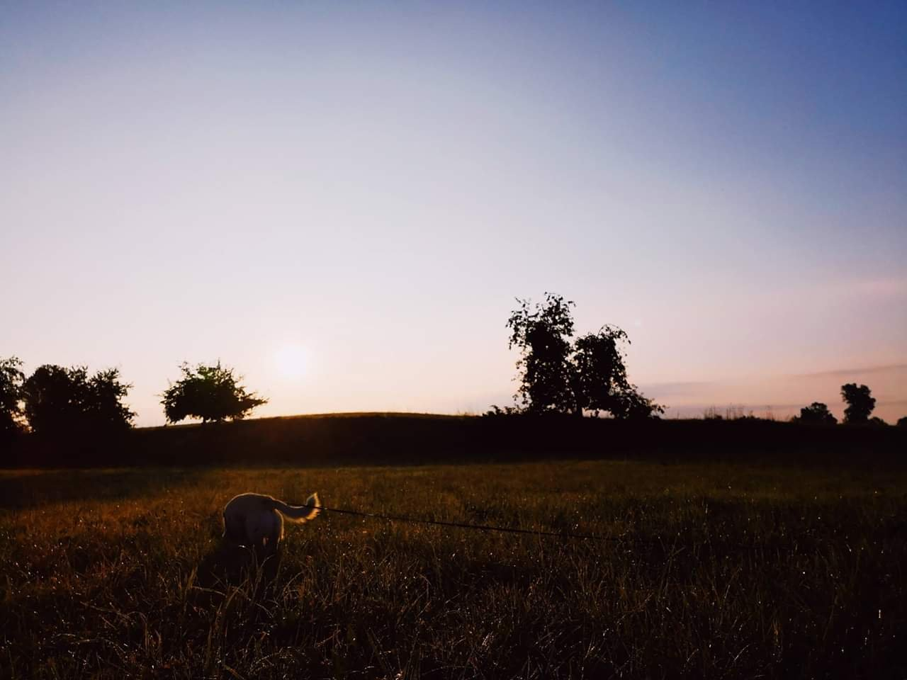 Hundeblog Canistecture Hund im Sonnenuntergang