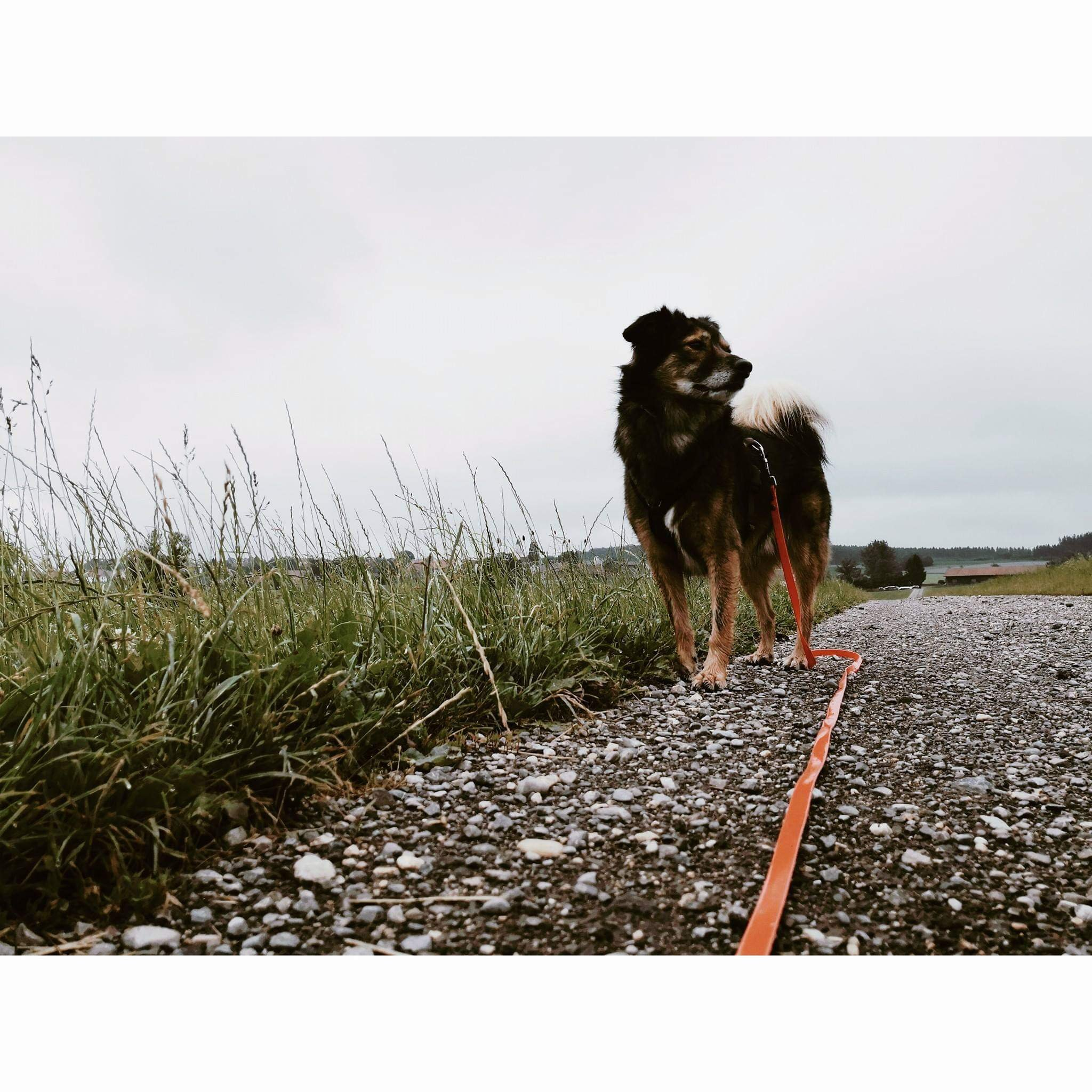 Hundeblog Canistecture Hund auf straße