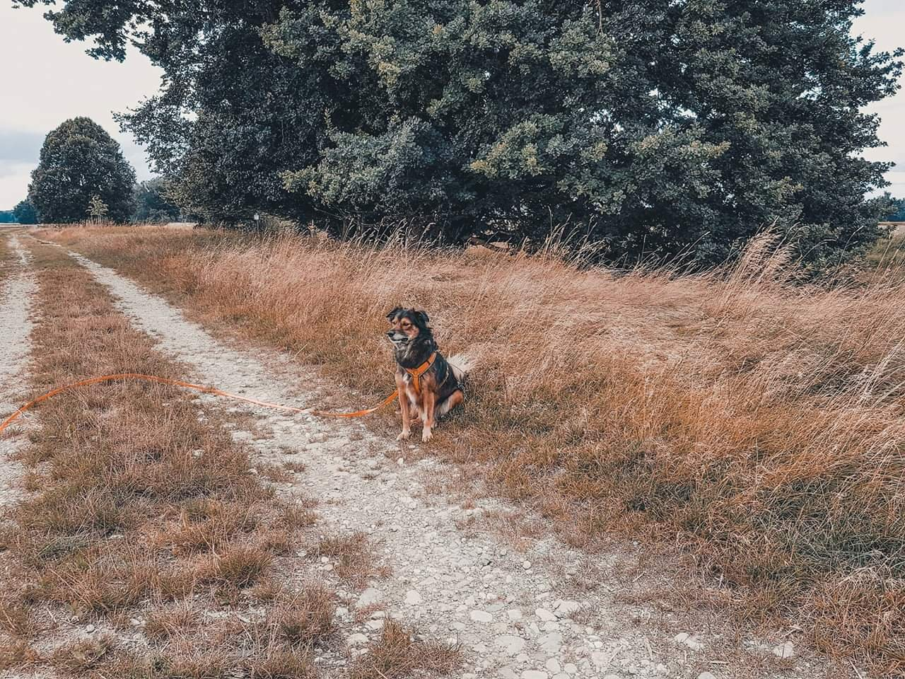 Hundeblog Canistecture Hund in Wiese