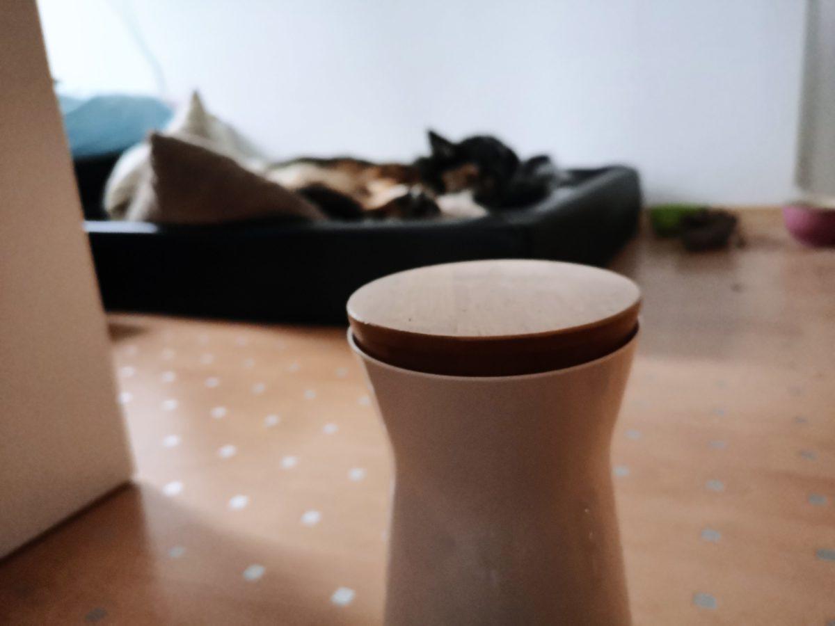 Hundekamera Furbo getestet Hundeblog Canistecture